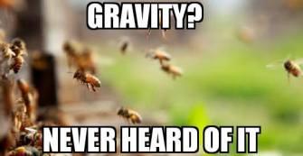 fe gravity2